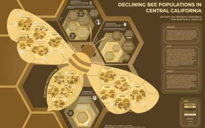 Declining Bee Populations in Central California